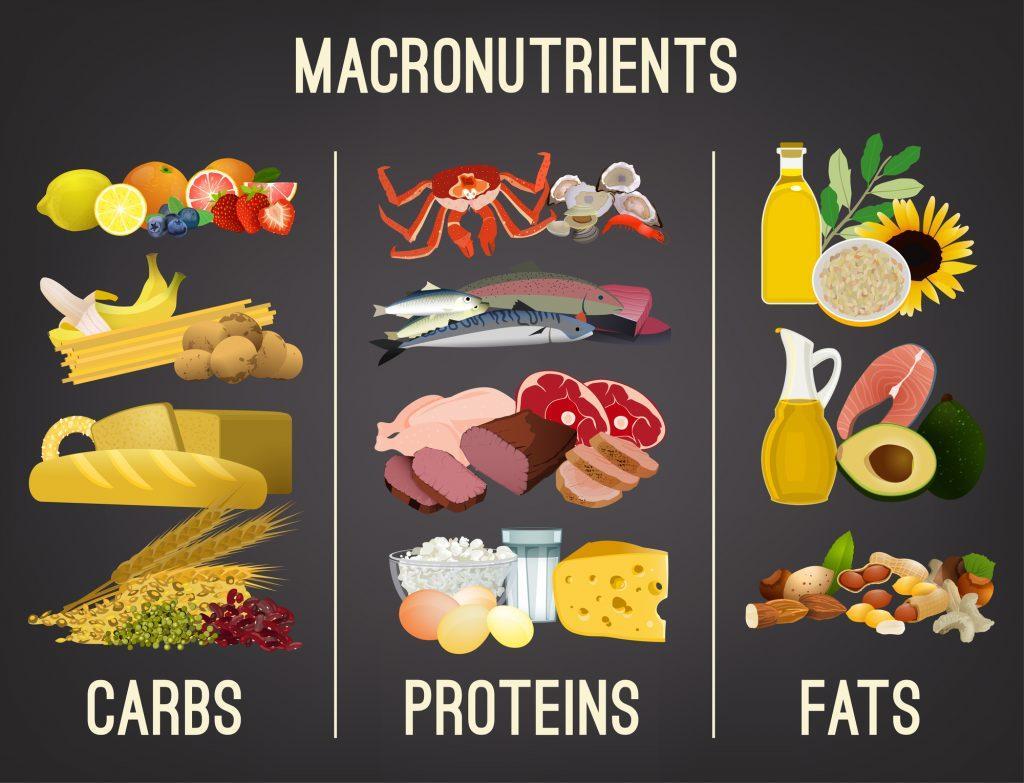 Understanding Macronutrients